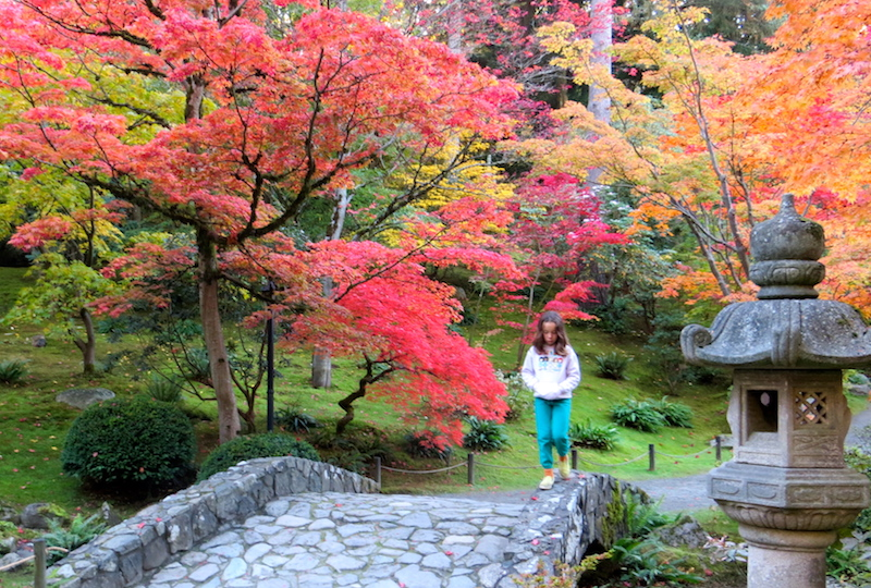 Seattle Japanese Garden in the fall